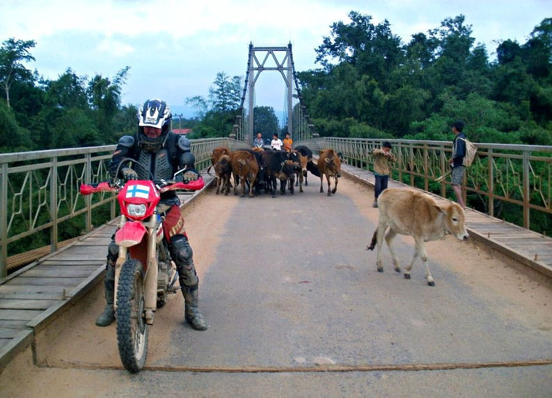 motorcycle-on-suspension-bridge-with-cows-Ban-Dong-Muang-Nong